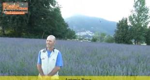 Presenzano – Lavanda, Bove il pioniere: così voglio coniugare ambiente, turismo ed economia (il video con l'intervista)