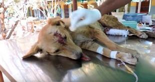 Gioia Sannitica – Investe cane, si ferma e chiama i carabinieri: animale salvato