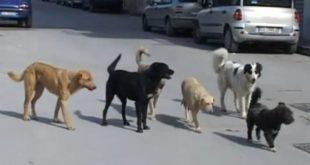 Pietramelara – Lotta al randagismo, registrazione gratuita all'anagrafe canina regionale