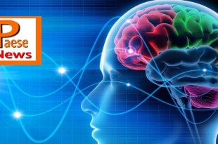 epilessia neuromed cervello