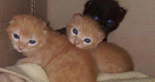MARZANO APPIO – Strage di animali domestici ad Ameglio, cresce la preoccupazione