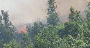 Calvi Risorta / Sparanise – Bruciano le colline dell'Agro Caleno, le fiamme divorano contrada Cerrito