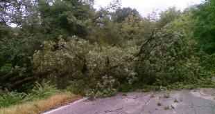 Pietravairano / Calvi Risorta – Temporale, albero cade in strada: intera famiglia miracolata