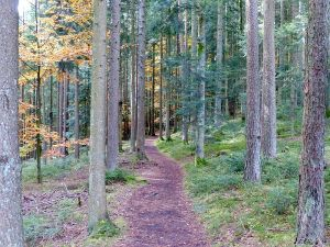 Black_Forest-_path_(10562040746)