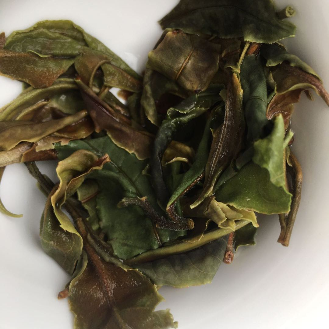 Laobanzhang White Tea