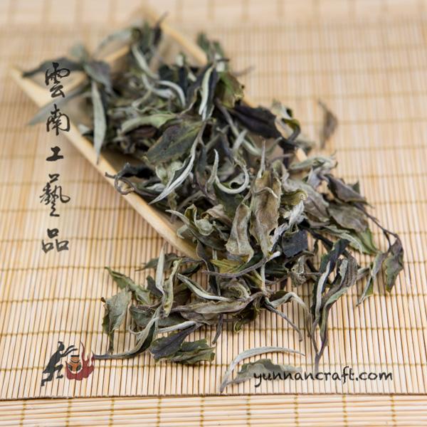 White tea yue guang bai - Moon light