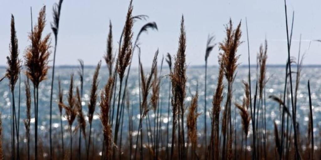 Climat: en Méditerranée, l'augmentation de la température a déjà atteint 1,5°C