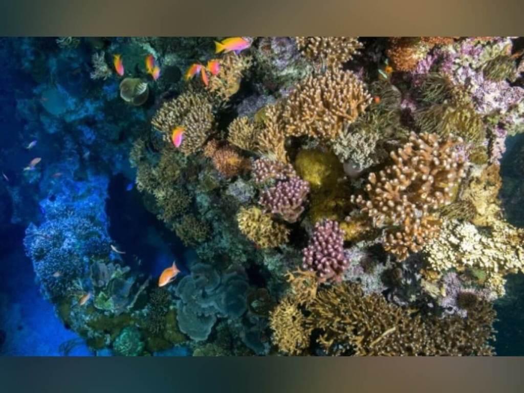 Monaco met en valeur le Corail dans une exposition inédite