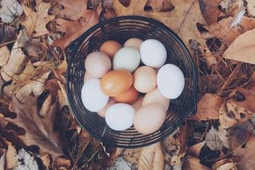 Frases en español sobre huevos