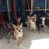 clinica veterinaria las canteras