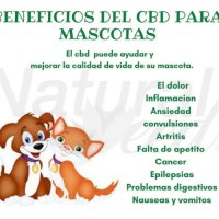 cbd para mascotas – paginascanarias