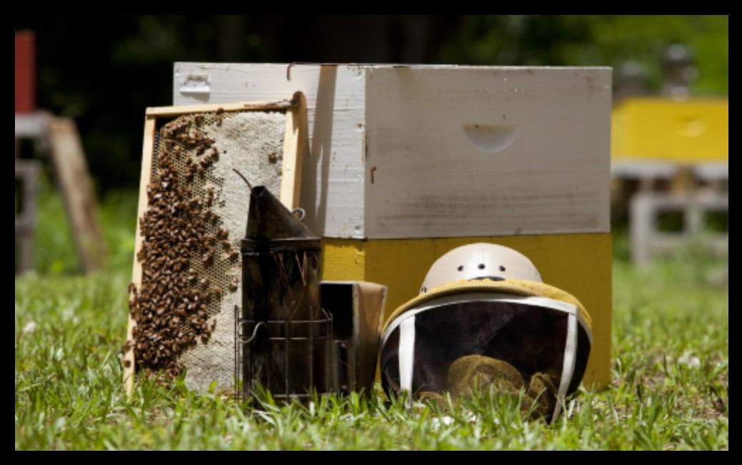 thumbnail_Beekeeping_1481139264285.jpg