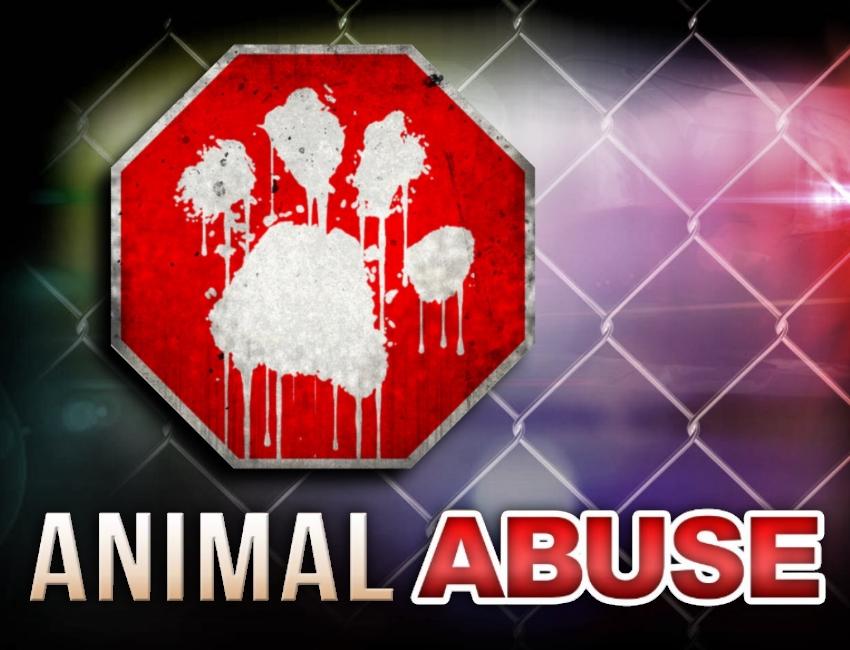 ots_animal_abuse_GEN_0816_1506358246335.jpg