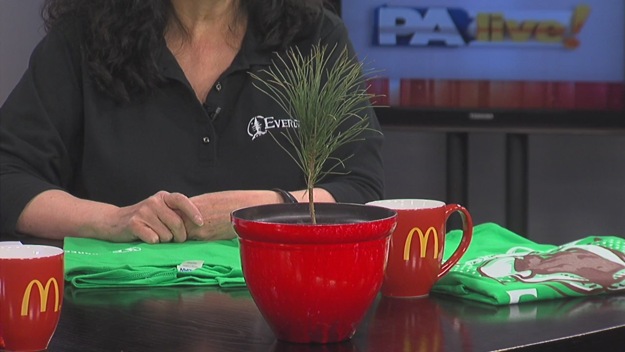 PA Live: Evergreen Arbor Day April 26, 2018