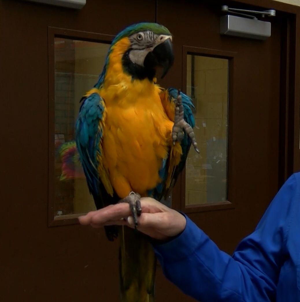 Parrot waving_1554069635010.jpeg.jpg