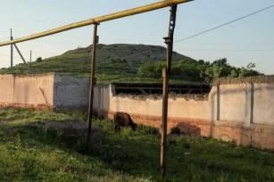 Mucche e tubi del gas nella Valle di Fergana