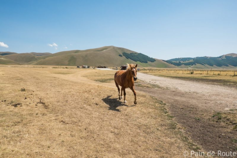 Cavalli in libertà nei Monti Sibillini
