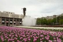 Tulipani primaverili