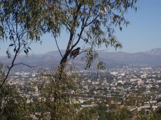 View of Los Angeles from the hills