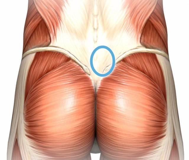 Anatomy Of The Lower Back Superficial Dissection With A Blue Circle In The Low
