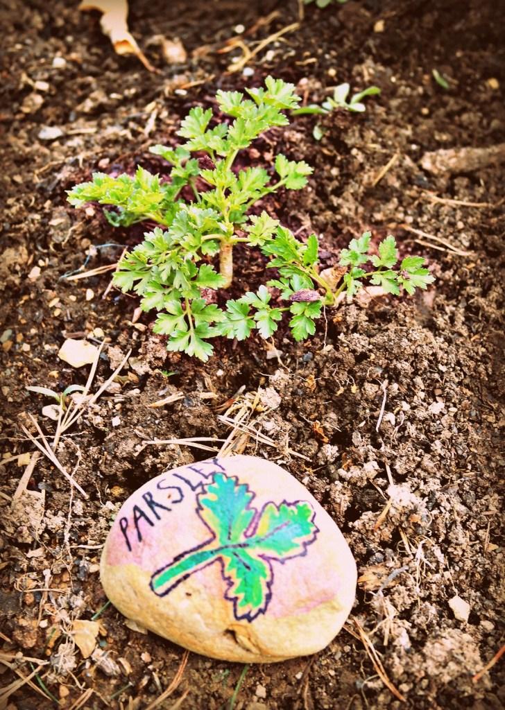 Parsley stone garden marker