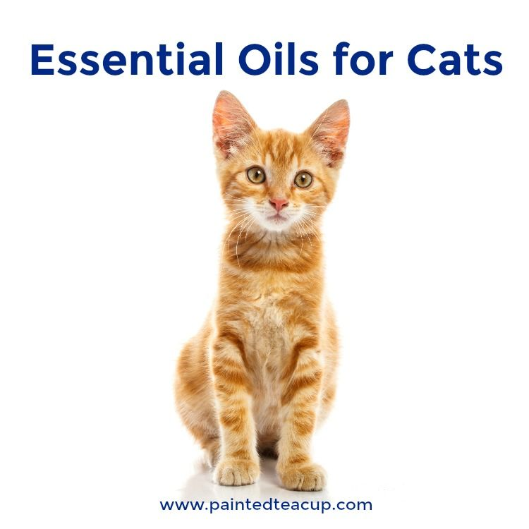 What you need to know about essential oils for cats: safety information, oils to avoid, tips for usage, research and more!