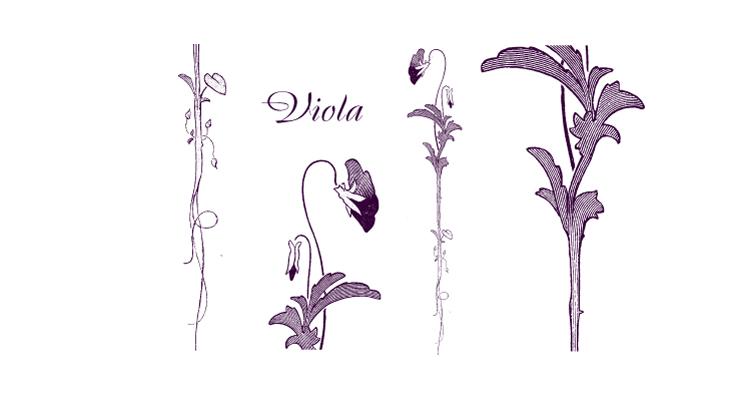 Viola - an elegant, stylized violet