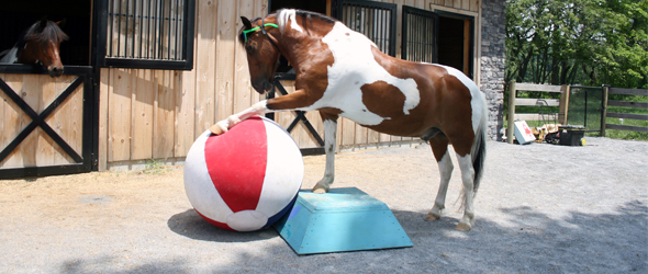 teach your horse to kick a ball