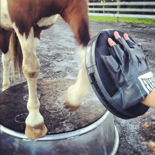 workout pony