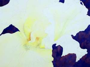 White Iris Step 3 masking the stamens and yellow watercolor wash