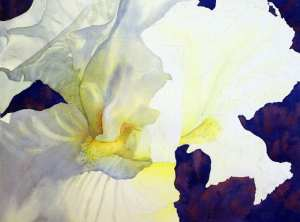 White Iris painting form and cast shadows
