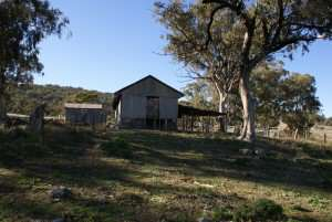 Old sheep shearing shed Quirindi NSW