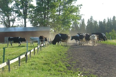 Teel karjamaale