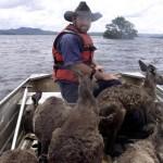australia-flood-2010-12-9-23-20-7