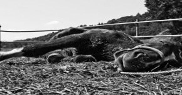 Farmer ve 16 de sus 30 caballos mueren repentinamente