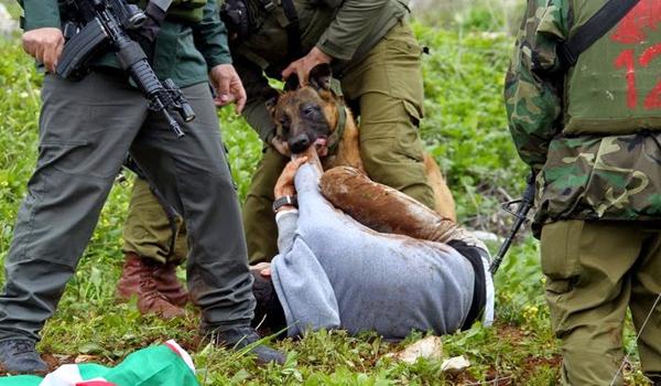 Israeli settlers unleash dog pack on Palestinian kids