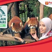 Paket Wisata Taman Safari Murah Fasilitas Oke 2021