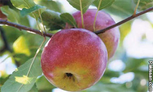 A future for organic apple growing in the Northeast