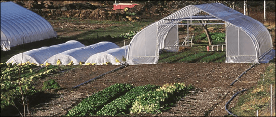 Tunnel farming more productive than traditional agriculture