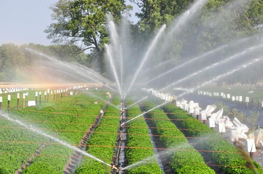 Can drip irrigation eradicate Pakistan's water crisis and food ...