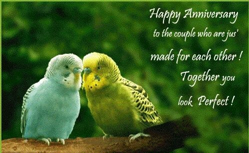 Happy Wedding Anniversary Saad Bhai Amp Bhabhi Sorryy Its
