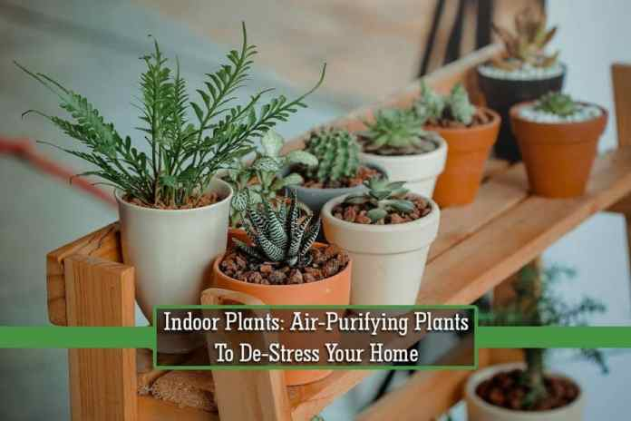 indoor plants, air-purifying plants