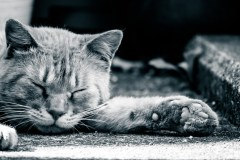 眠るネッコと肉球