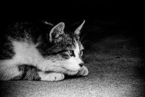 身構える猫(モノクロ)
