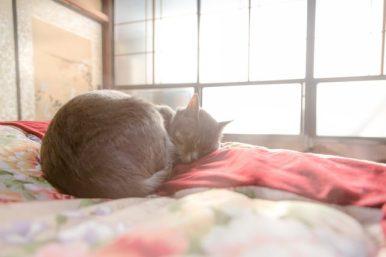 ひなたぼっこしながら布団の上でスヤスヤ眠る猫
