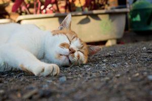 アスファルトで爆睡中の猫