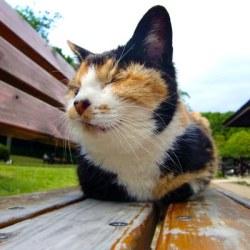 ベンチに座る猫(ブチ)