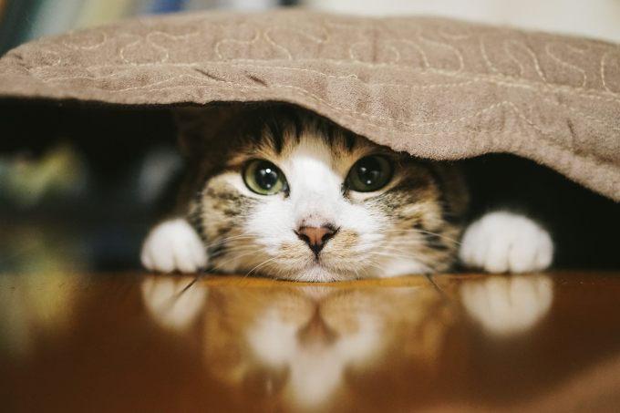 「猫 無料素材」の画像検索結果
