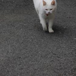 そろりと近づいてくる猫ちゃん