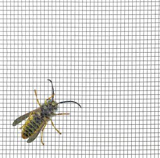 insektenschutzgewebe-v2a-stahlgewebe